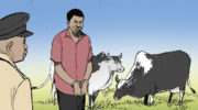 13 arrested for cattle theft
