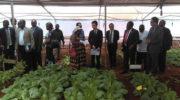 'Horticulture is lucrative diversification avenue'
