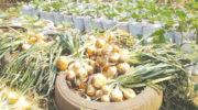 Veggie farmstead on wheels