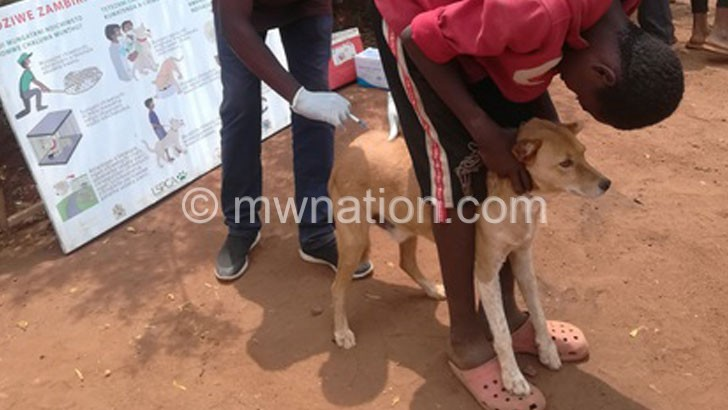 Lilongwe rabies vaccination campaign nears target