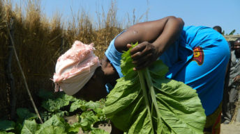 Agriculture innovations  adoption low—experts