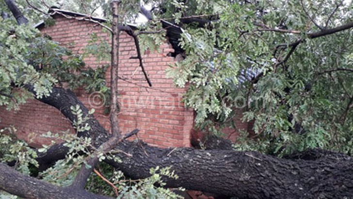 tree accident | The Nation Online