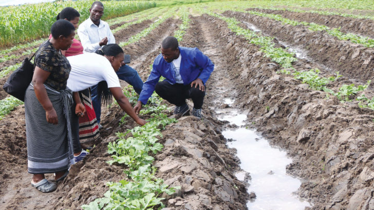 Bringing hope to farmers with horticulture solutions