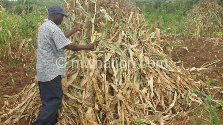 maize 3 | The Nation Online
