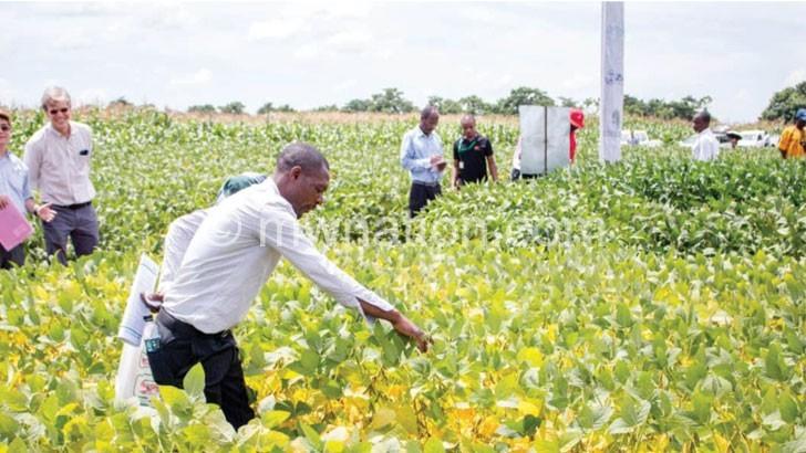 New soya varieties  excite processors