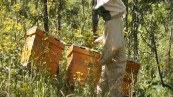 Dedza communities restore forests