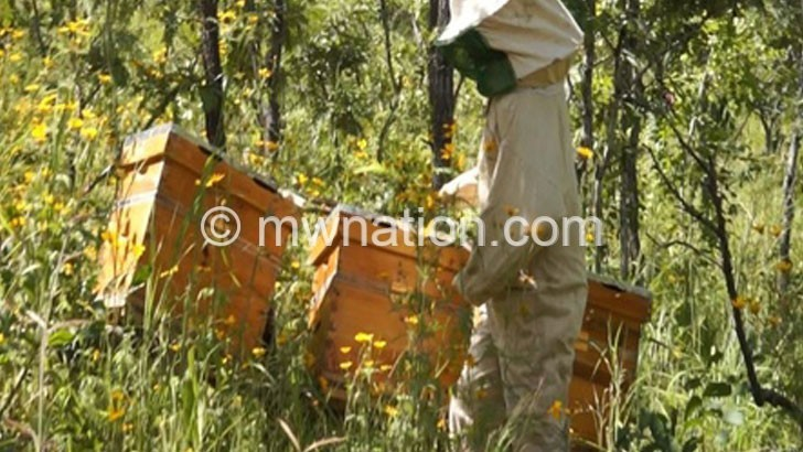 bees | The Nation Online