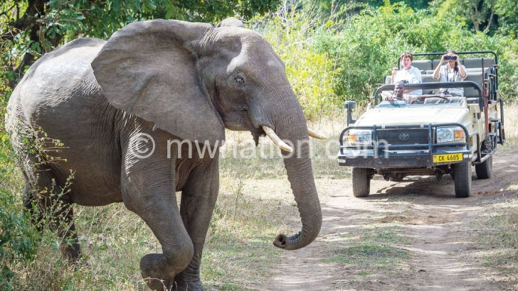 elephant | The Nation Online
