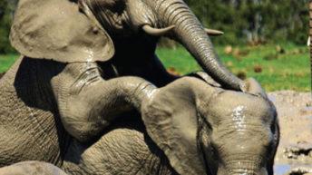 Tackling illicit ivory trade