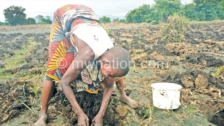 farming | The Nation Online