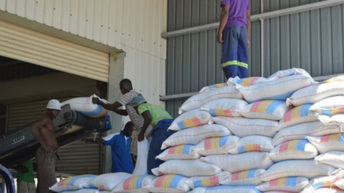 Kenya removes duty  on maize imports