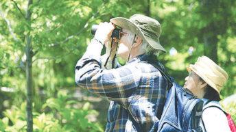 Saving Michiru bats, birds