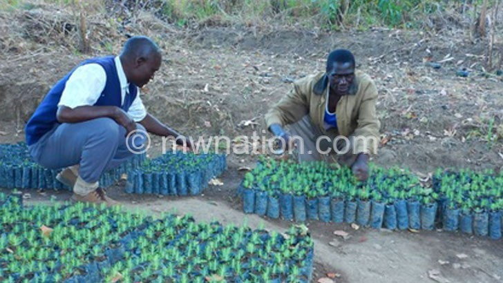 Rumphi man plants 43 000 trees