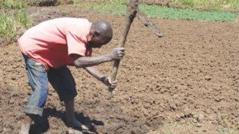What breaks farmers backs?