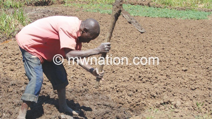 Agriculture labour fails to cushion workers—FewsNet