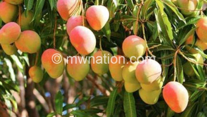 mangos | The Nation Online