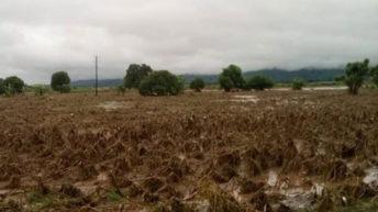 'Malawi's development  hurdles multi-pronged'