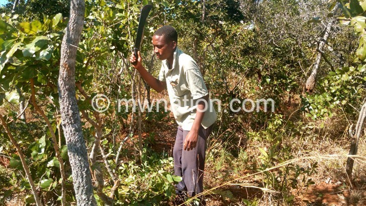 Vangalala forest | The Nation Online