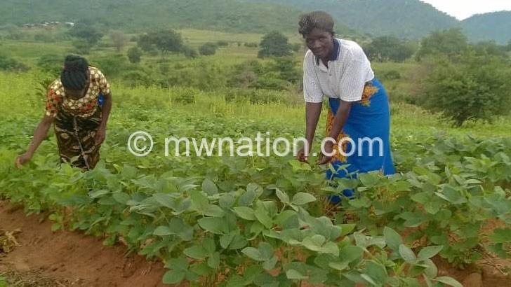 Project helps Rumphi women farmers to double harvest