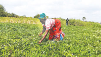 Oxfam touts its recovery programmes in Nsanje
