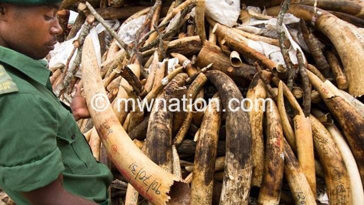 Zambians, Malawians arrested for ivory deals