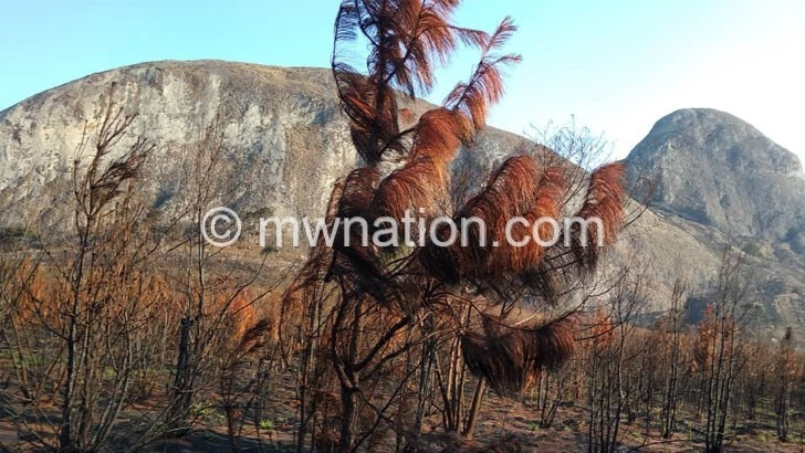 Fire destroys trees in Viphya Plantation