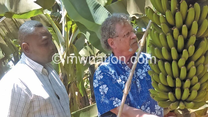 Reviving banana yield – The Nation Online