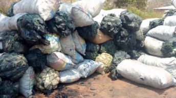 Rumphi Forestry department impounds 106 charcoal bags