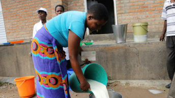 Maize price rise hits dairy sector