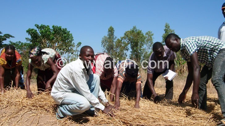farmers 2 | The Nation Online