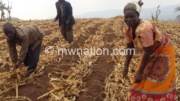 farmers | The Nation Online