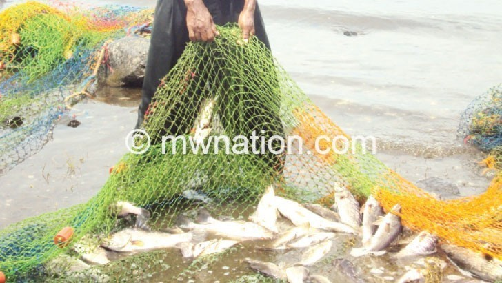 Fish output decline pushes up prices