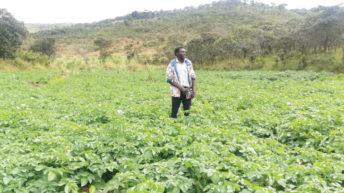 Youths embrace farming