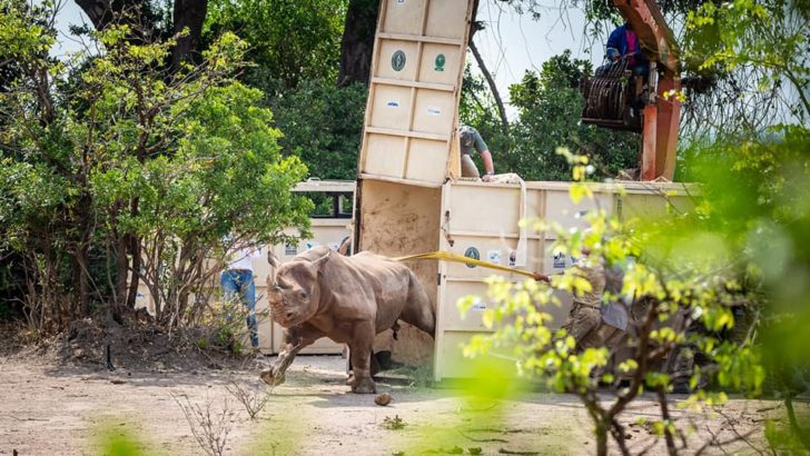 Liwonde National Park gets 17 rhinos