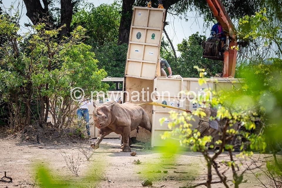 Black Rhino in Liwonde 1 | The Nation Online