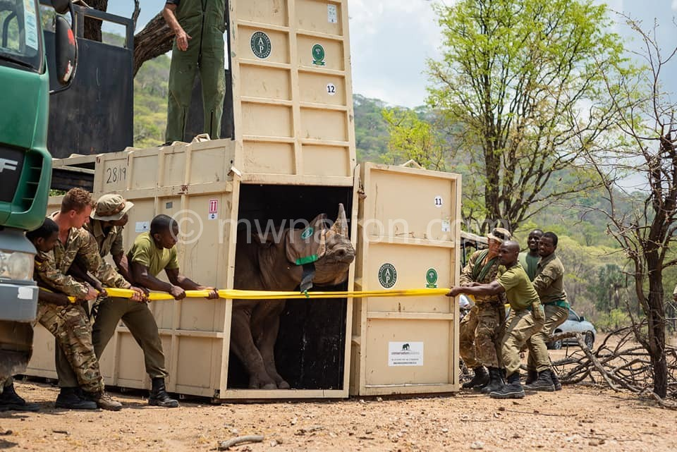 Black Rhino in Liwonde 3 | The Nation Online