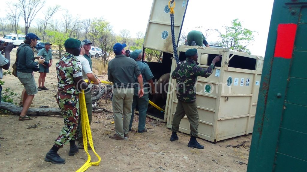 The rhino cages being lowered from trucks | The Nation Online
