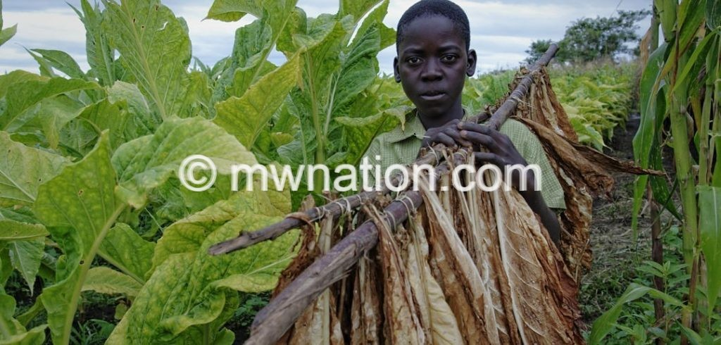 Tobacco child labour | The Nation Online