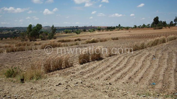 dry maize field | The Nation Online