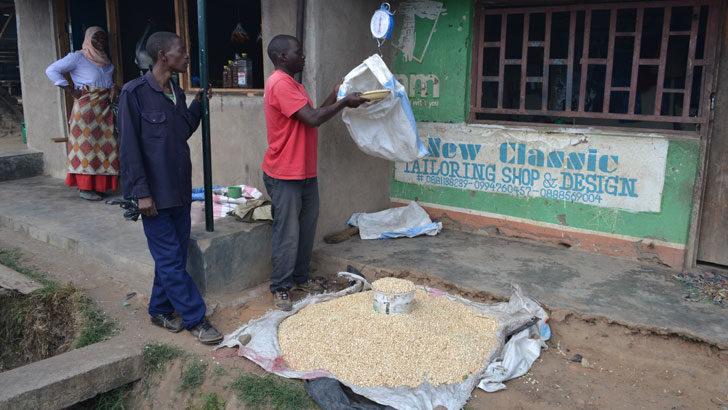 Govt hints at Maize imports