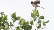 Dzalanyama: The bird haven