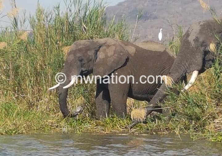 Liwonde National Park | The Nation Online