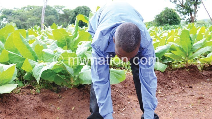 tobacco 1 | The Nation Online