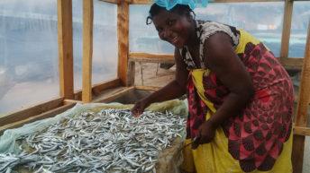Women own fish factories
