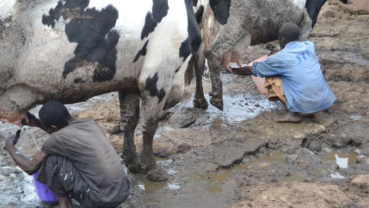 Dairy sector regulator to spur growth—producers