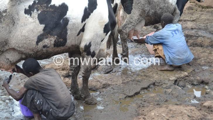 milk | The Nation Online