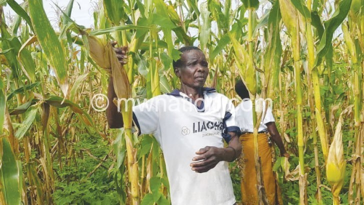 maize field | The Nation Online
