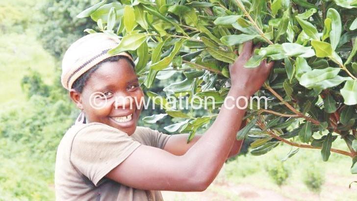 farmer | The Nation Online